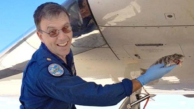 [Internacional] O dia em que um salmão colidiu com um Boeing 737 Fish-strikes-noaa